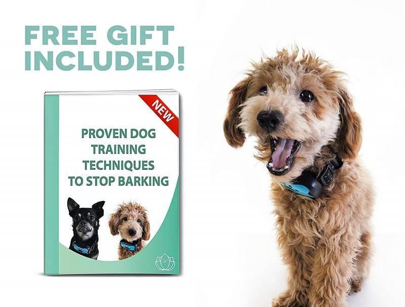 best dog anti bark device