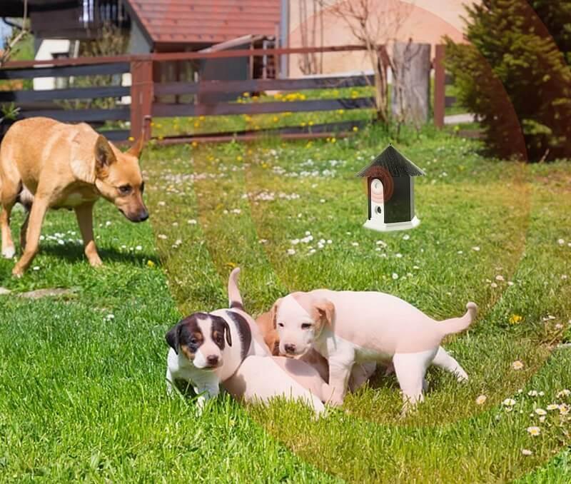 best bark control