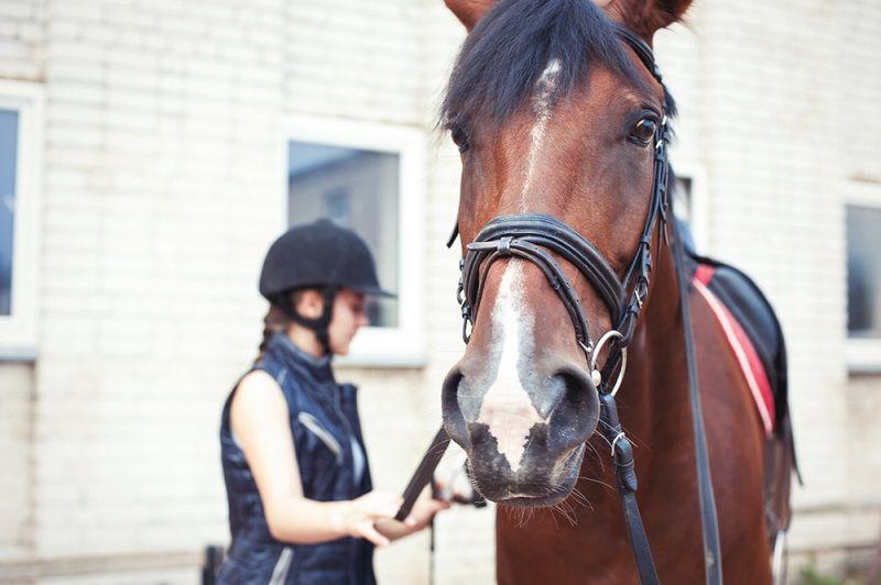 Are Horses Pet