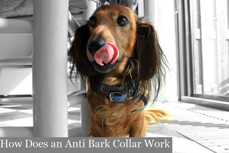 How does an anti bark collar work