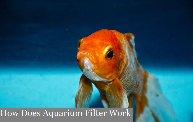 How does aquarium filter work