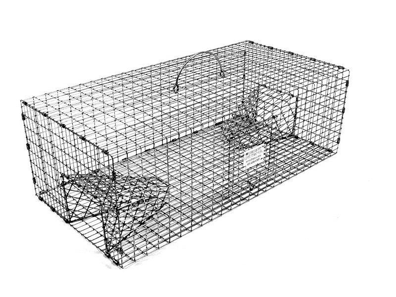 best birds traps